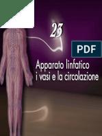 Apparato linfatico 1_8Martini