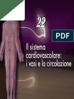 Cardiovascolare- vasi e circolazione3_4Martini