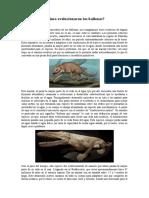 Cómo evolucionaron las ballenas