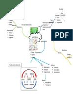 mapa diana quimica