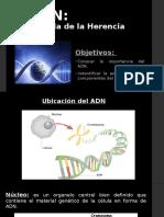 ADN - La molecula de la herencia