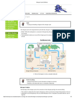 Nitrogen Cycle _ BioNinja.pdf