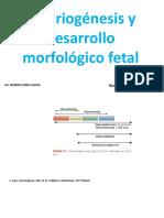 Embriogenesis y desarrollo morfologico fetal
