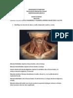 Miologia de torax y miembros superiores