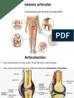 Sistema articular 22.pdf