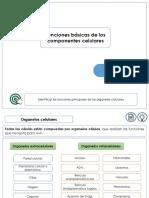 FUNCIONES+BÁSICAS+DE+LOS+COMPONENTES+CELULARES