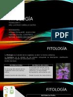 Fitología de La Madera
