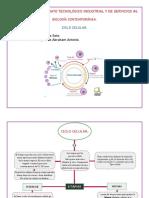 GarciaMorquecho_CicloCelular.pdf