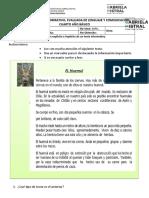 Guia Lenguaje4 TextoInformativo  08-05-2020   4°.docx