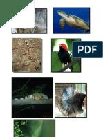 Gambar Flora & Fauna
