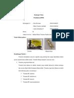 Kelas B_Kelompok 11_Tugas Praktikum BPPR_Pengumpulan Bahan Pakan_Vitamin.pdf