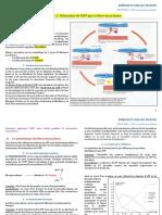Tspé-ENERGIE-chapitre 3 contraction musculaire et ATP prof.pdf