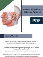 Anatomia - 08 - Sistema Muscular [Músculos da Cabeça, Pescoço e Tronco]