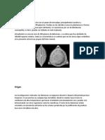 Diatomeas charla de micro.docx