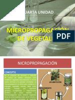 CUARTA UNIDAD - MICROPROPAGACIÓN DE VEGETALES