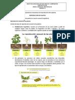 REPRODUCCION EN PLANTAS.docx