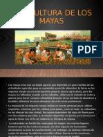 Agricultura de los mayas