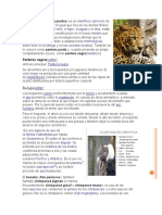 clasificaciones de animales