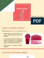 Taenia Solium presentación 2