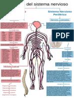 Esquema Sistema Nervioso