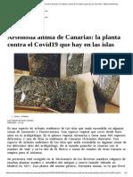 Artemisia annua de Canarias_ la planta contra el Covid19 que hay en las islas - elEconomista.es.pdf