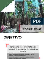 TALLER ENFUNDE DE BANANO