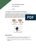 Autorregulación diafragma