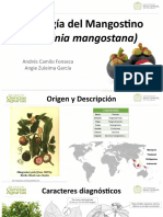 Mangostino (Garcinia mangostana)