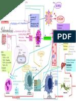 Respuesta Inmune innata- Salmonela.pdf