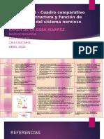 Actividad 2 - Cuadro comparativo sobre la estructura y función de las células del sistema nervioso