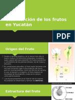 Clasificación-de-los-frutos-en-Yucatán