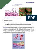 Clostridium Difficile, C. Perfringens y C. Botulinum