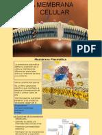 membrana y uniones