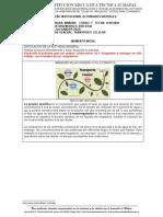 copiar-GUIA 2 BIOLOGIA 7°.docx