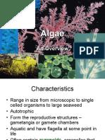 Algae (1)