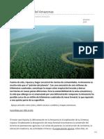 elordenmundial.com-La deforestación del Amazonas
