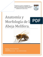 Anatomía de abejas