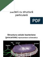 Curs 3 procariote particular_   fungi_protozoare_2018