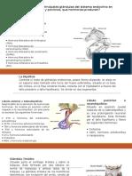 TALLER 2. Unidad PRINCIPIOS  Y  GENERALIDADES   DE  MORFOFISIOLOGÍA  ANIMAL.pptx