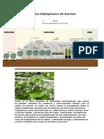 AGROINFORMACIÓN Cultivo hidropónico de berries MATERIALES