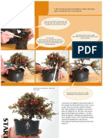 Bonsai Step by Step En