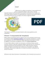 2-Citoplasma e citosol.docx