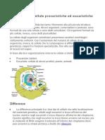 1-Differenza tra cellule procariotiche ed eucariotiche.docx