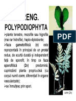 f Incr. Polypodiophyta.pdf