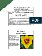 m Subcl Liliidae a.pdf
