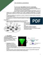 TEMA 22 Anabolismo autótrofo