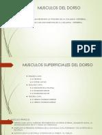 MUSCULOS DEL DORSO Y TORAX 2019.pdf