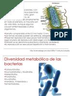U6_BacteriasA_20346.pdf