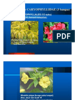 7_anak Kelas Caryophyllidae (3 Bangsa)