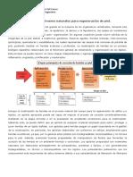Apósitos de polímeros naturales para regeneración de piel